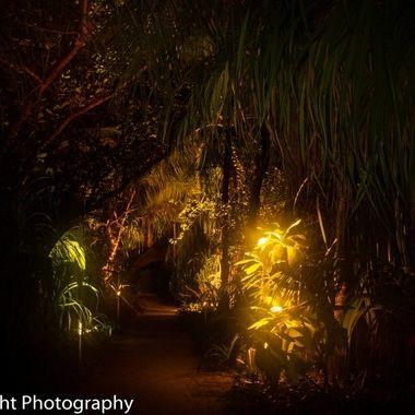softly illuminated pathway through the tropical undergrowth on the island