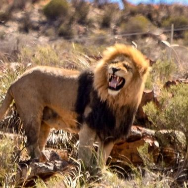 Taken at Aquila Game Park, S. Africa.