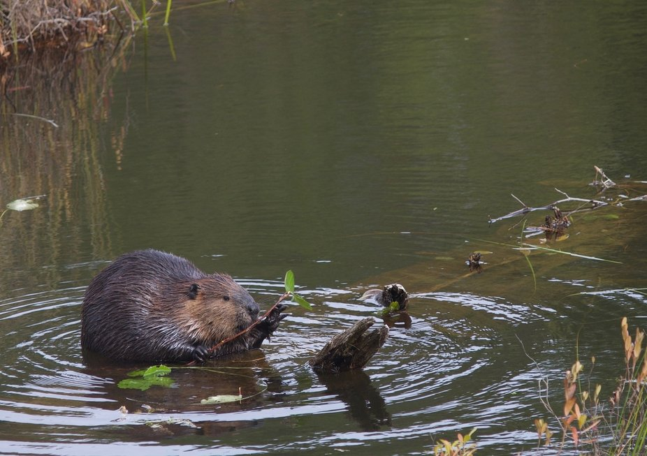 Came across busy beavers during a walk in the park
