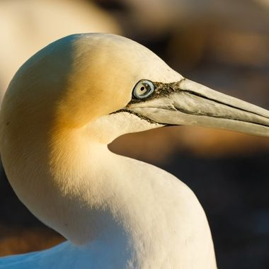 Some insights into the breeding colony on the island of Helgoland