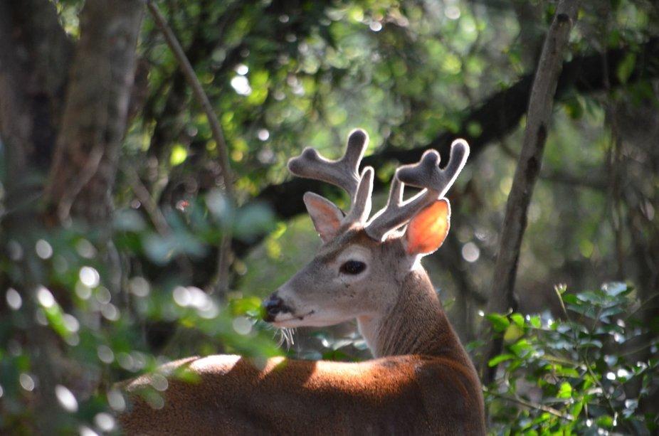 deers eyes on you