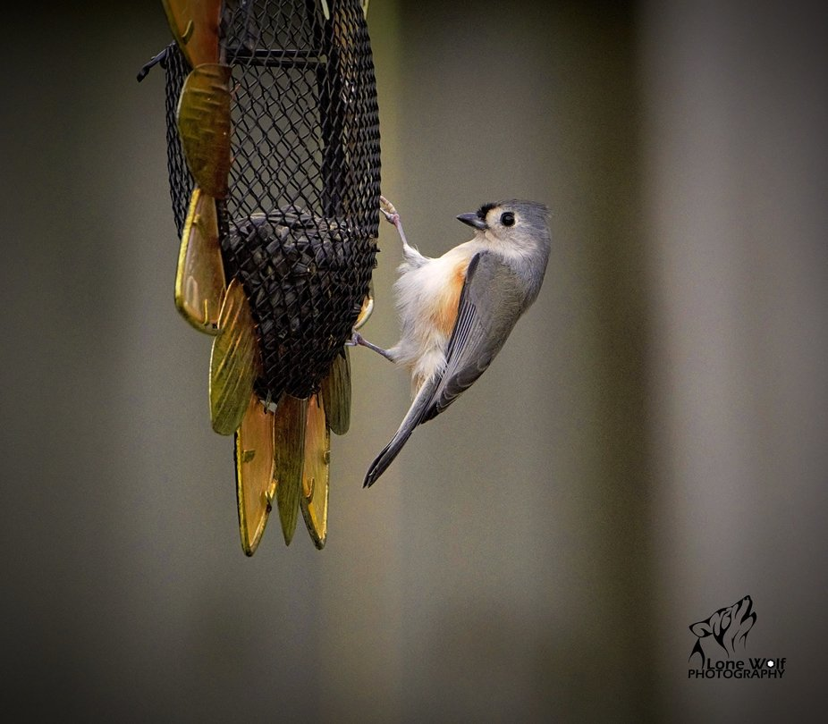 Seeds for a Titmouse