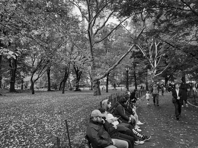 Bench Central Park (c) 2018
