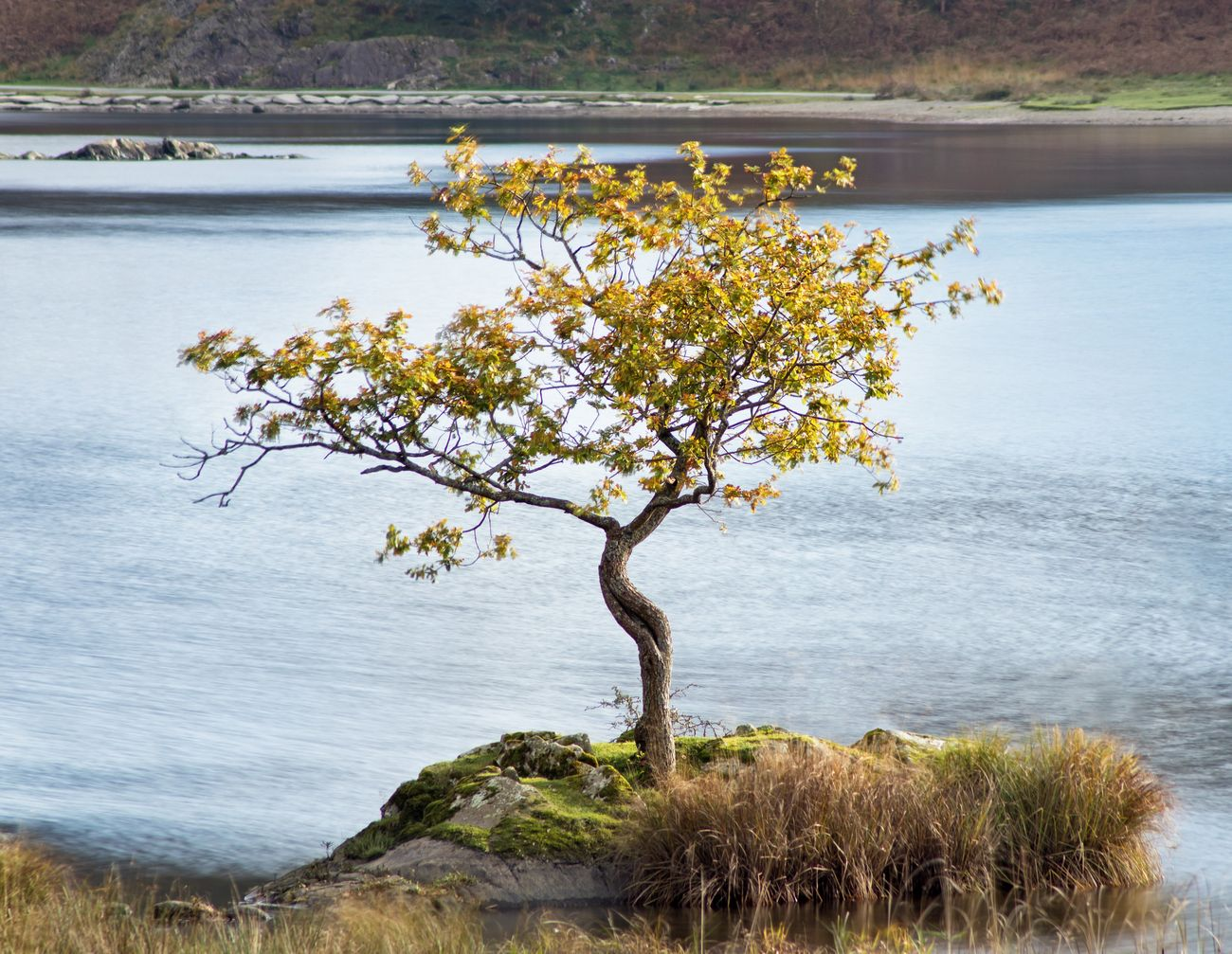 A single tree on a small peninsula off the shore of Rydal Water