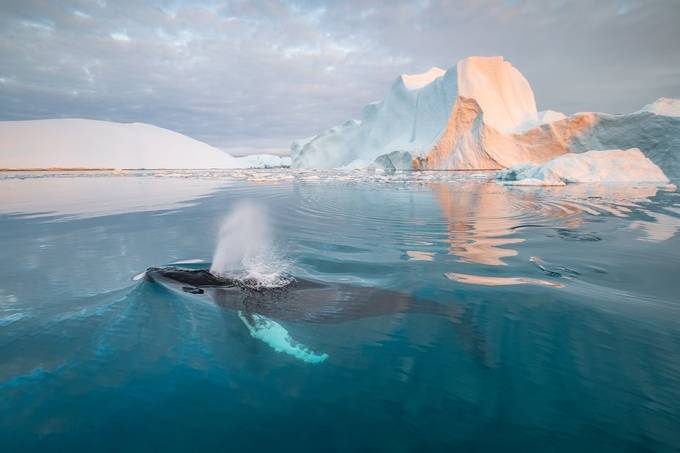 [ … hello Humpback ] by raymondhoffmann - Covers Photo Contest Volume6
