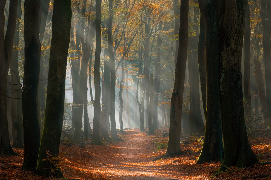 One of the oldest forests in the Netherlands, Speulder forest in a Fairytale setting.