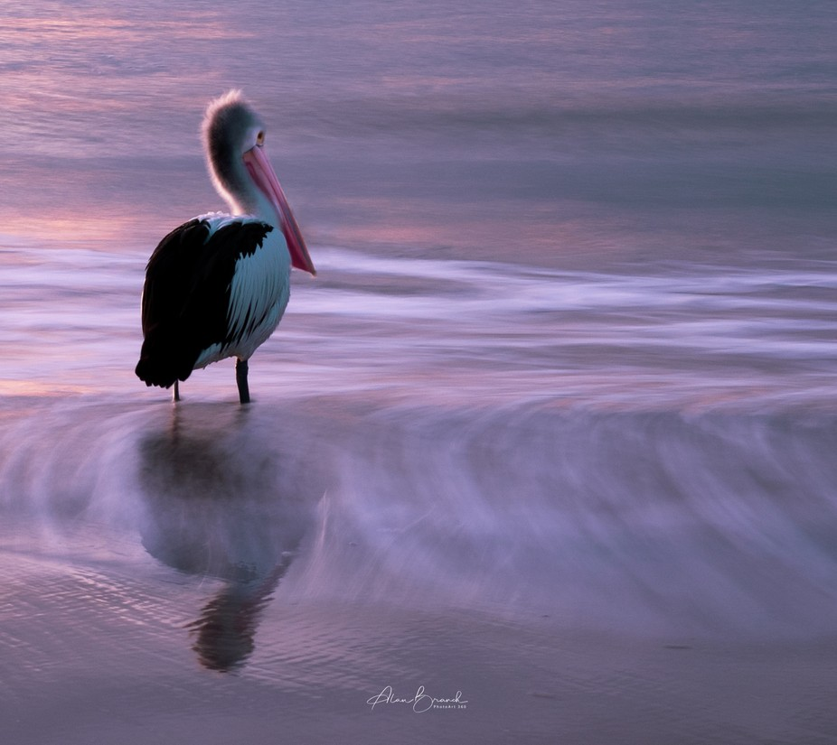 Early morning on the beach watching a pelican
