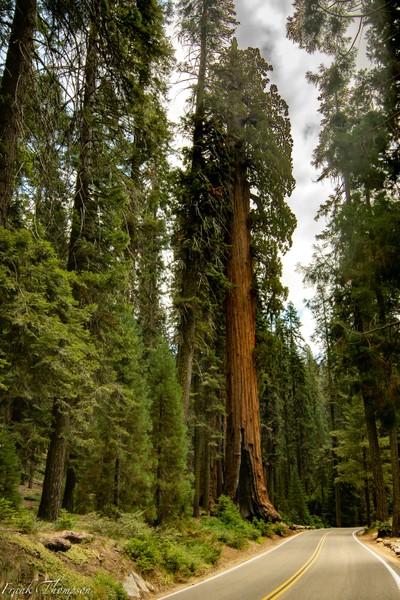Road through Sequoia National Park