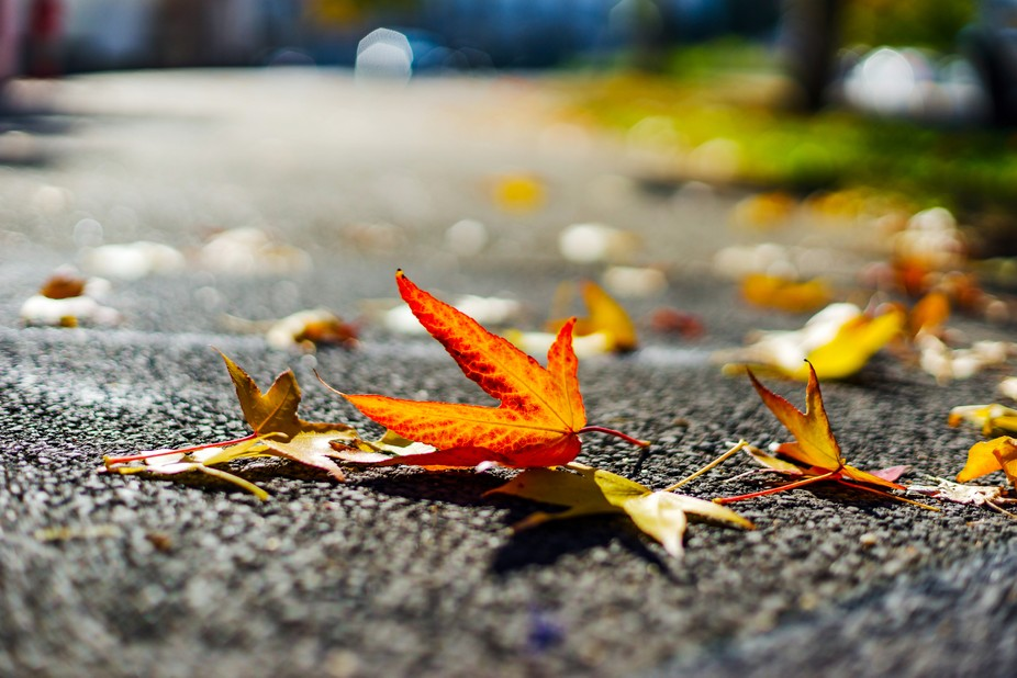 Autumn leaves on th ground
