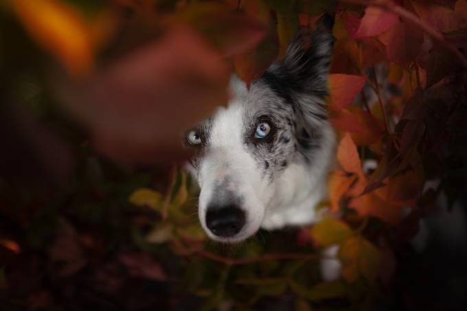 Through the leaves by VeShandor - Image Of The Month Photo Contest Vol 52