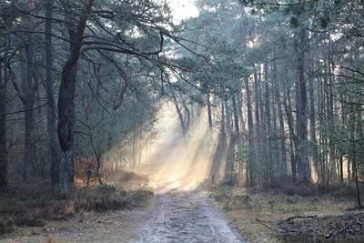 Leuvenum Forest