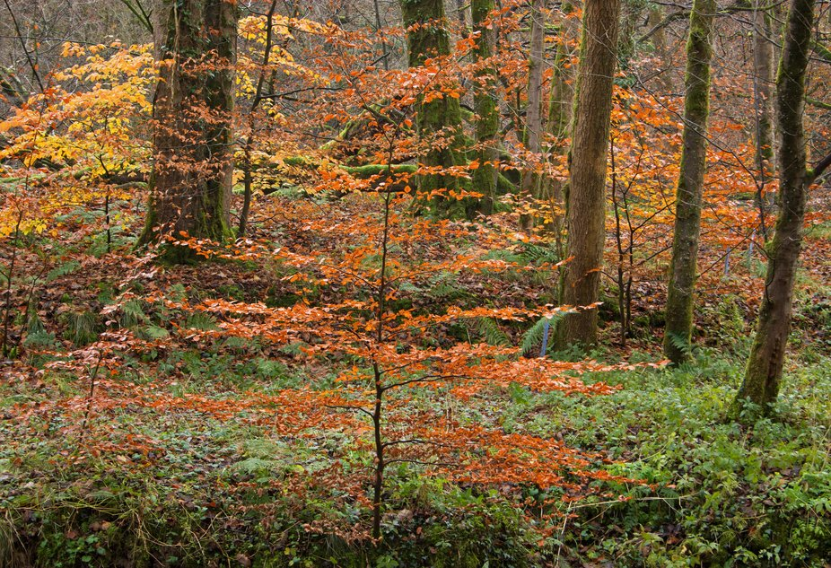 Leaves in different stages during late autumn, by the River Brock, Lancashire