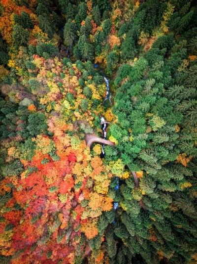Autumn forever ????????