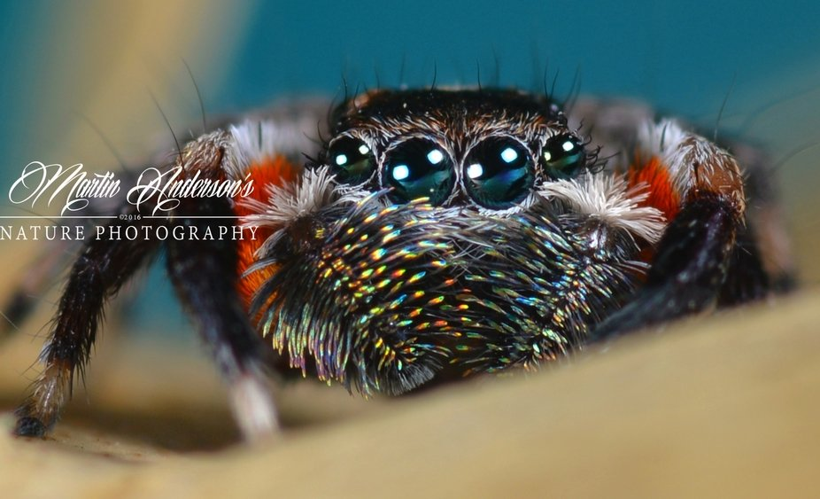 Jotus auprise. Looking festive. I have not posted in a LONG time due to health issues, this was t...