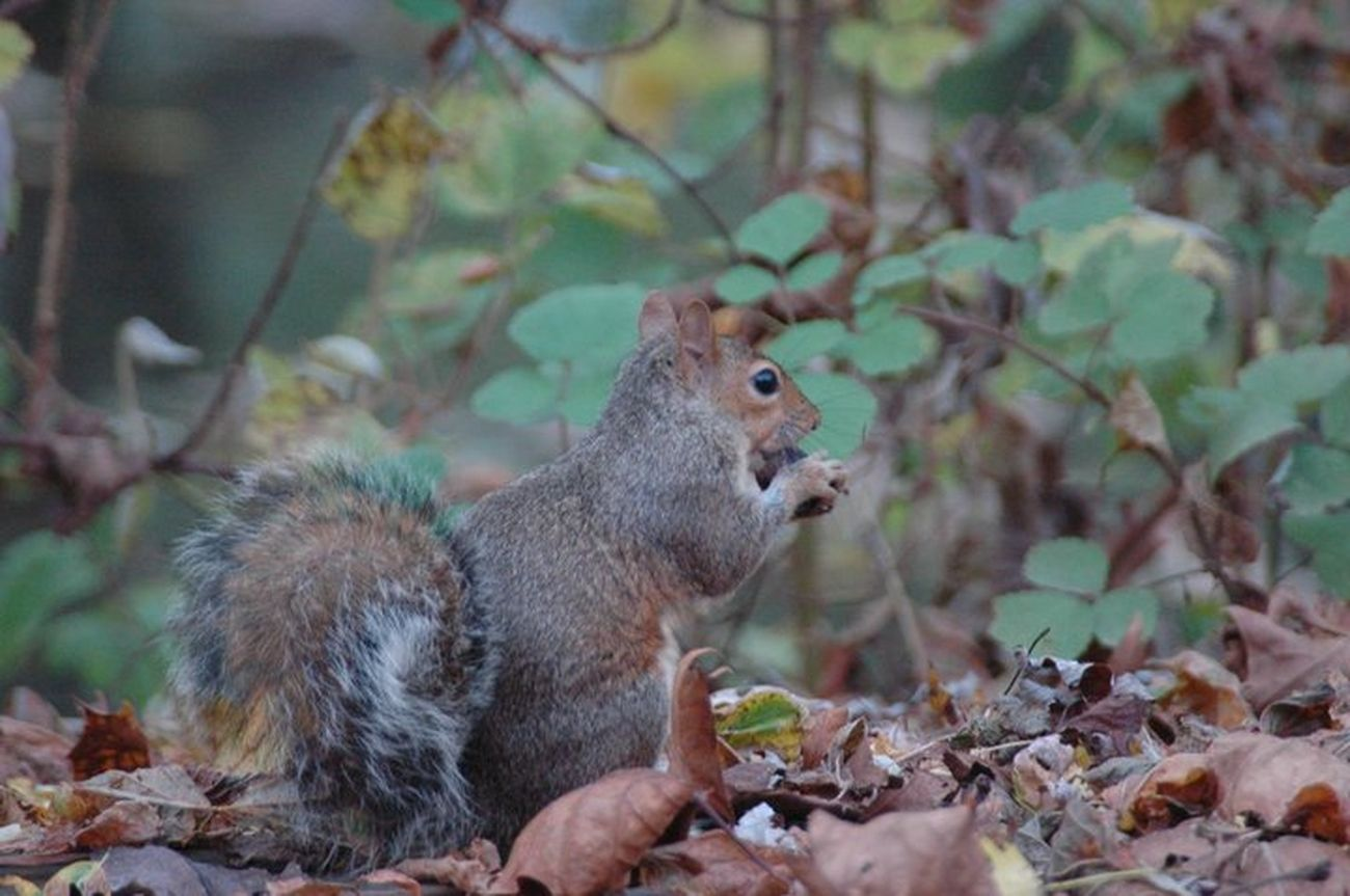 Squirrell eating a Find