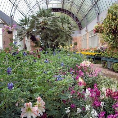 Domain Winter Gardens (2) - Parnell, Auckland, New Zealand