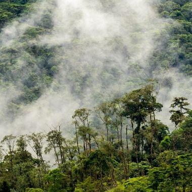Cloud Forest DSC04913