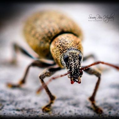 DSC_3908-ps_pe   A Bug.