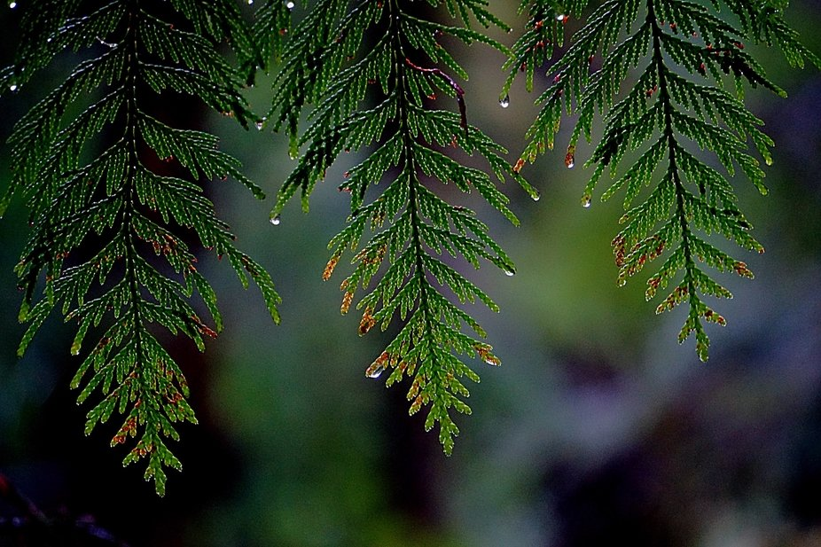 taken on a rainy day in the rainforests of the Alberni Valley