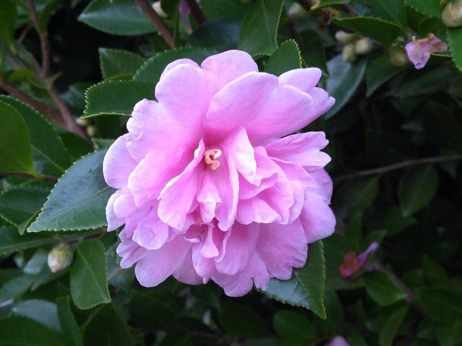 A late season bloom