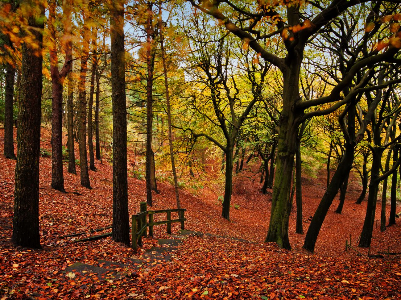 A woodland path covered in autumn leaves at Tandle Hills, Lancashire