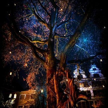 LT-ps_pe  The Light Tree.
