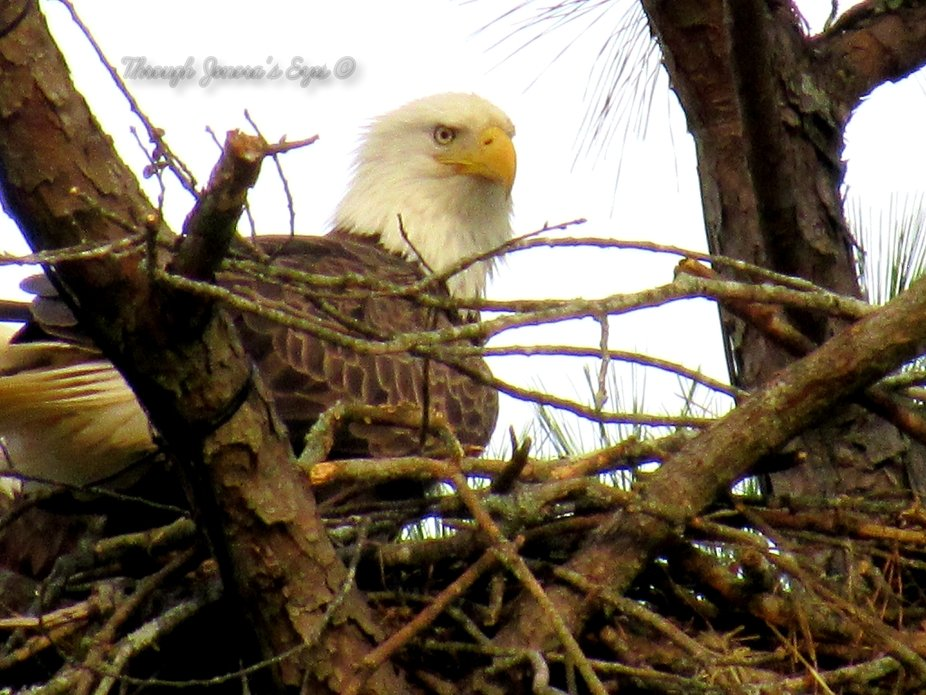 Watchful eye over her nest