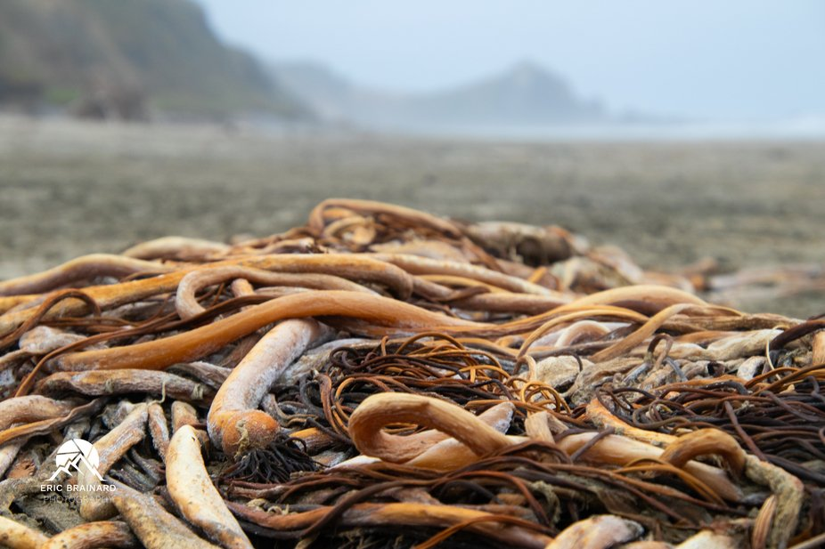 A pile of driftwood on the beach at Seal Rock in Oregon