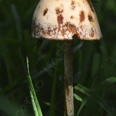Garden variety mushroom