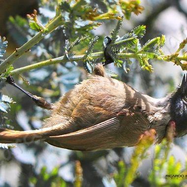 Feeding upside down