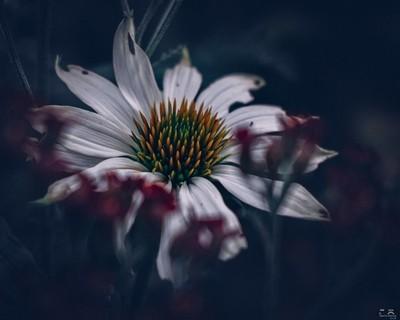 Ageing Bloom