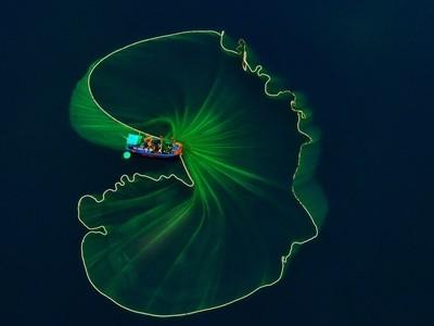 Lotus leaf on the sea