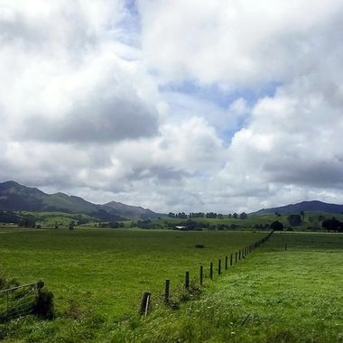On The Road - Auckland to Omapere (1) -  New Zealand