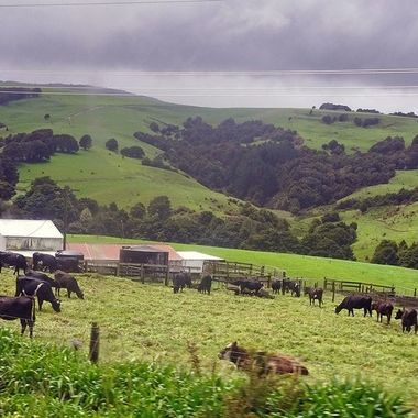 On The Road -  Auckland To Omapere (2) - New Zealand