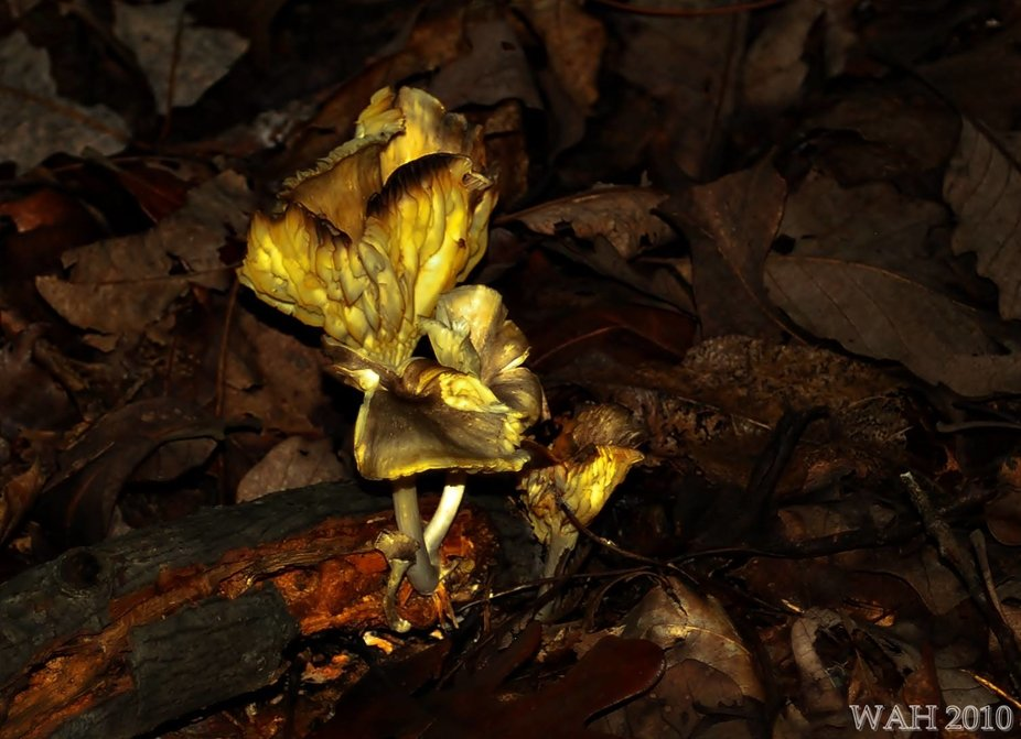 Love hunting down unusual looking shrooms in the forest