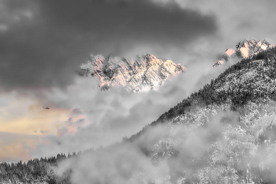 Winter Bird in the Air. Spillimacheen, Columbia Valley, BC