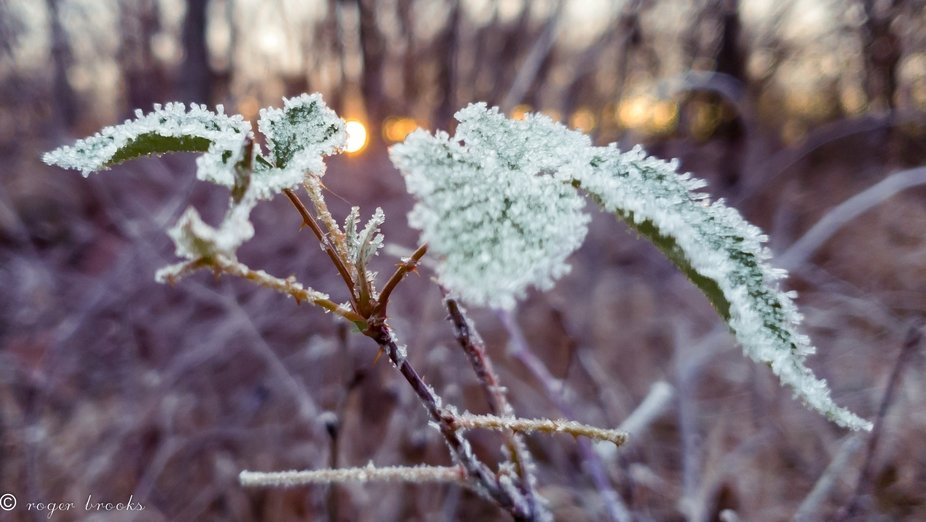 The last green leaf at Thorn Creek frosted with ice Chrystal's by the approach of winter.