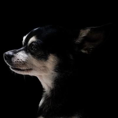 Dog in Profile #2