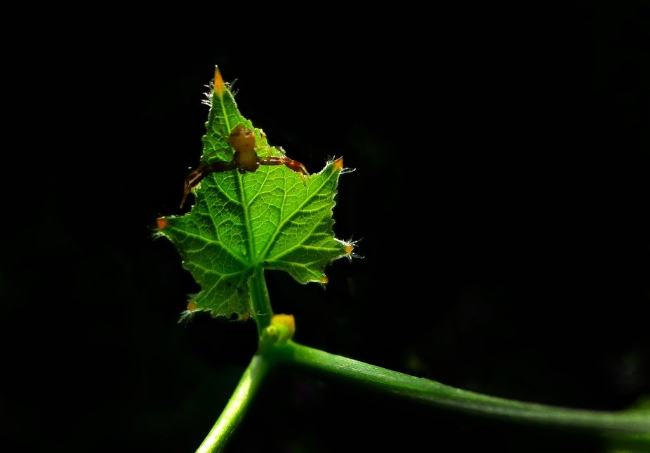 The spider sat on the leaf calmly. And the view looking very good. So took it.