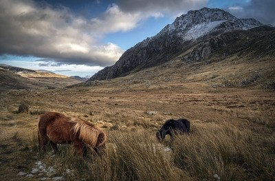 Ponies on the Mountain