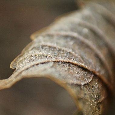 close up of brown leaf