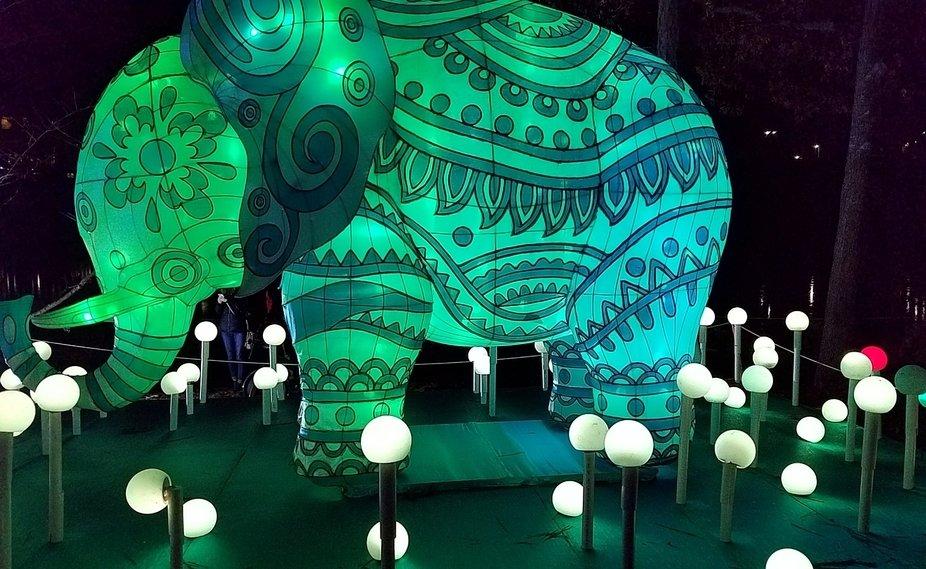 Elephant at Chinese Lantern Celebration