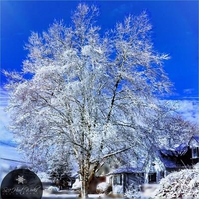 ❄ ...let it snow... let it snow... let it snow ❄ #hugZz ツ...let it snow...let it snow...let it snow...  *#hugZz ツ