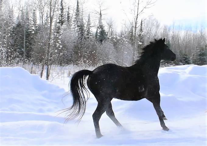 A friends horse on a frosty afternoon just after a snowfall