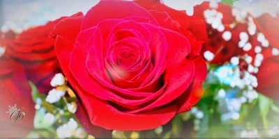 The beauty of red roses.. *hugZz