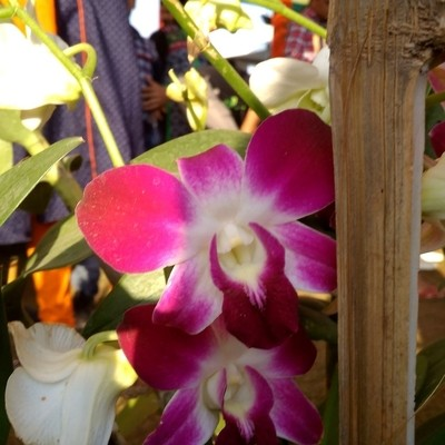 #orchid lover