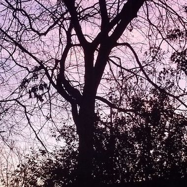 I looked up and thought how beautiful.