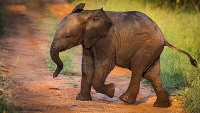 I'm a baby Elephant 2019  387A4735