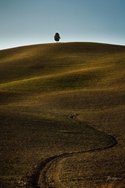 Lonely tree on the hill.