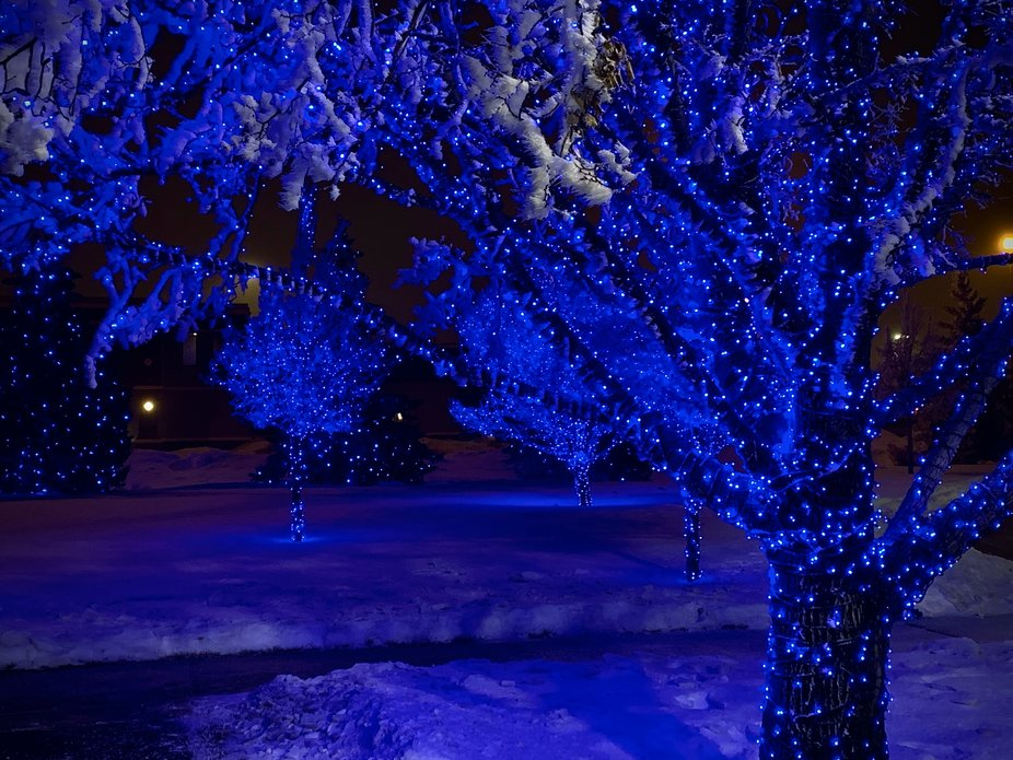 Flocked in Fargo.  Christmas lights in the city at night.